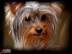 photograph me please!! (Abdullah Alhuzimi - www.huzimi.com) Tags: portrait dog olympus zuiko abdullah e510 50200 alhuzimi
