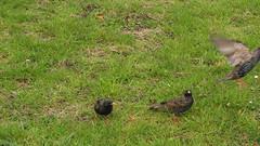 hop (tnarik) Tags: park london birds pájaros londres hydepark pjaros comiendoalvuelo