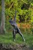 Archer - for my friend Me Bee (Sabreur76) Tags: sculpture art statue bronze geotagged louisiana indian explore batonrouge archer hdr vicenç cubism photomatix tamron28300 supershot outstandingshots nikond80 platinumphoto ultimateshot feliú betterthangood goldstaraward sabreur76 vicençfeliú geo:lat=30351104 geo:lon=91058252
