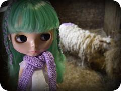 sheep definitely go baaa...1 of 2