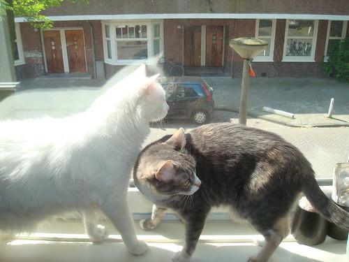 Linus e Boo