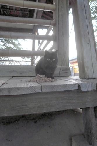 Today's Cat@20090510