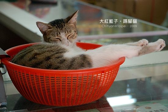 Cat。大紅籃子。踢腿貓01