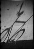 (stereomind) Tags: shadow london bike sombra fixedgear