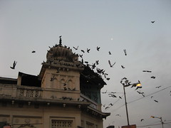 First flight (SUJOY DAS) Tags: morning india pigeons goodmorning kolkata kalighat