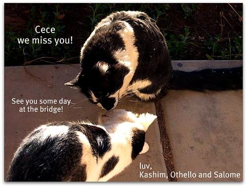 Missing Cece