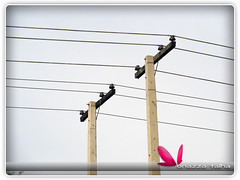 Power Lines Emerging from a Pole
