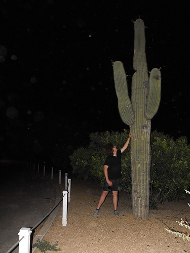 big cactus in arizona