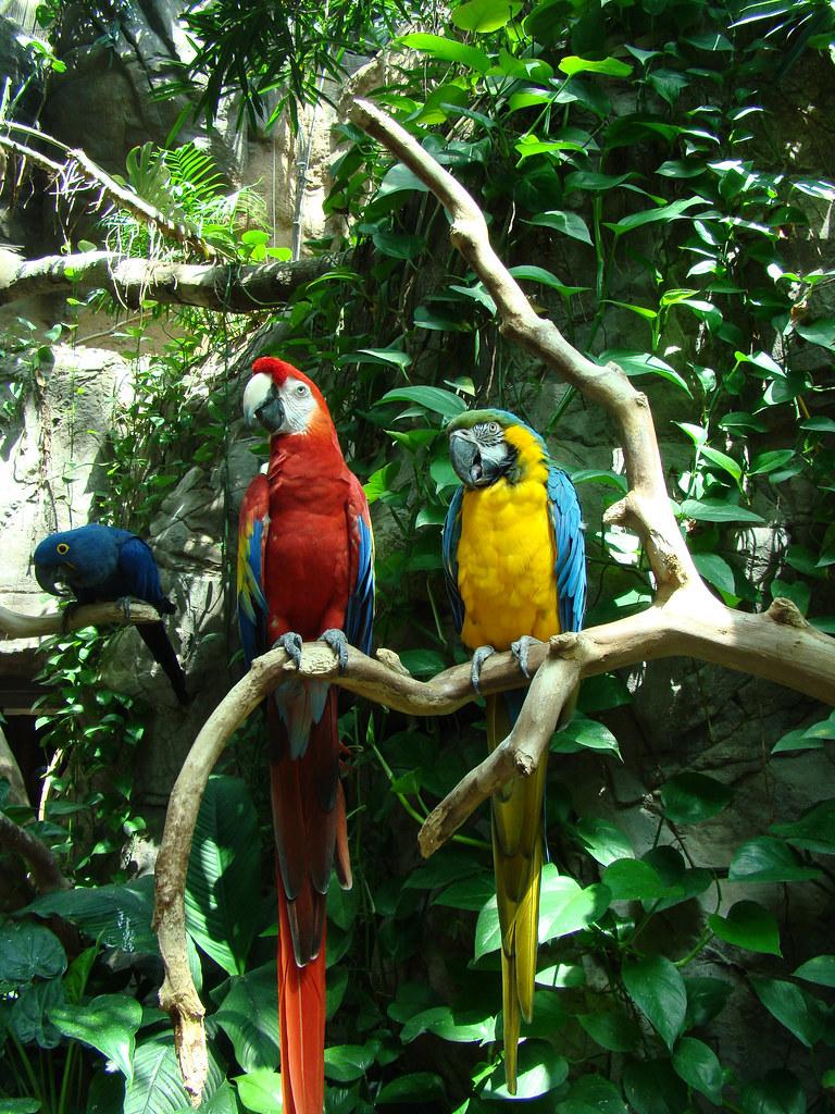 DSC06304 parrots