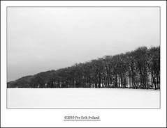 (Per Erik Sviland) Tags: bw snow tree photoshop nikon erik per d300 pererik cs5 sviland sqbbe pereriksviland photoshopcs5