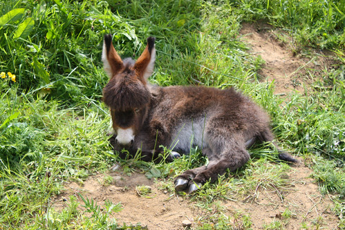 As yet unnamed baby donkey weighs less than 1st