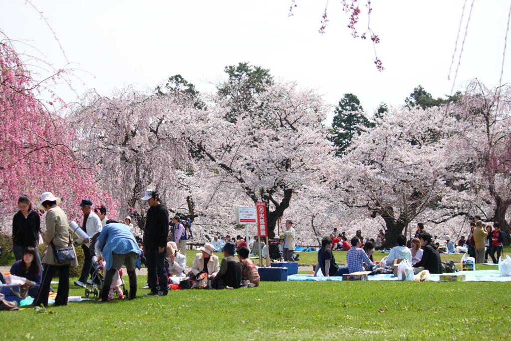 Hirosaki Park Sakura (23)