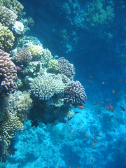 138_3822 (LarsVerket) Tags: egypt snorkling fisk undervannsfoto