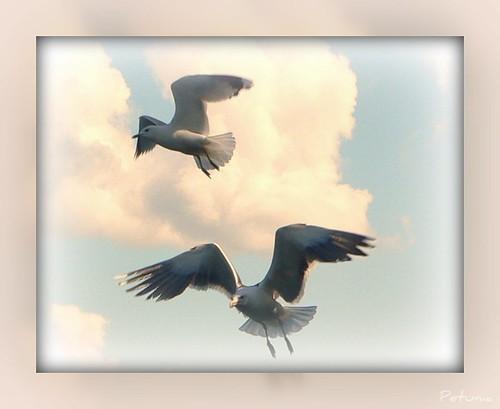 Seagull Angels