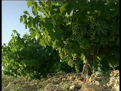 Ahora se espera la reacción de los mercados vitivinícolas