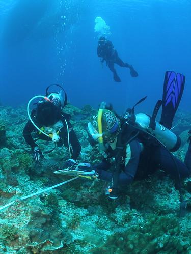 TEIA - 台灣環境資訊協會 拍攝的 科學指導員跟隨著參與珊瑚礁總體檢的志工們,隨時提供適當的協助。。
