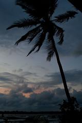 Windy Palm (dallas.decko) Tags: ocean sunset tree colors palm panama centroamerica islabastimentos