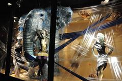Harvey Nichols (mrkubi) Tags: africa lighting new light england london mannequin window beautiful animals retail shopping design cool nice nikon display collection departmentstore shoppingmall trend manikin harveynichols fasion windowdesign d90 consept nikond90 mrkubi