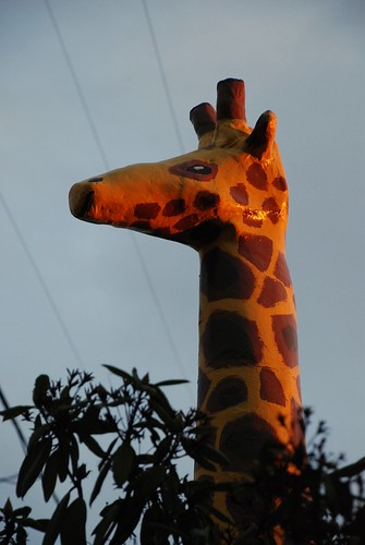 The Hood Giraffe