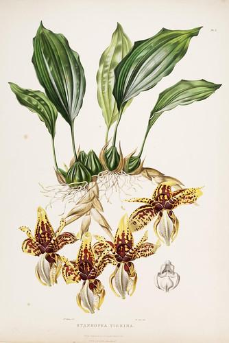 002- Orquideas de Mexico y Gatemala 2