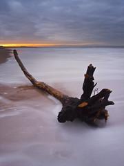Bamburgh Beach (Corica) Tags: longexposure sea seascape water landscape sand northumberland driftwood northsea bamburgh ricoh corica gx100