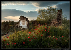 8:15 P.M. (Miguel Angel Avi) Tags: espaa muro atardecer pared andaluca spain ruina poppy linares andalusia higuera amapola