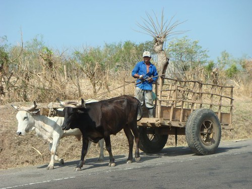 Farmer, El Salvador.