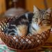 Fruit Basket Photo 3