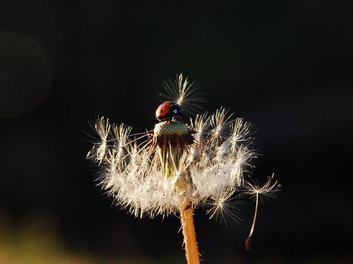 ladybug. :)