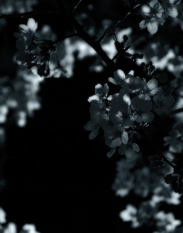_night_