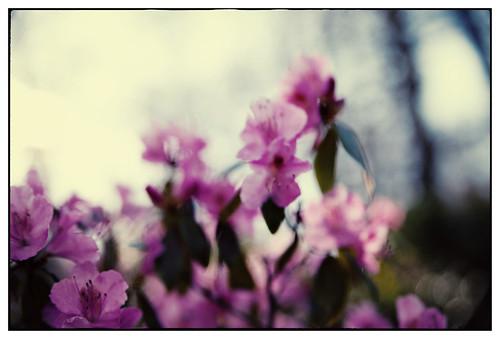 Gunnebo - blommor-18