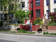 Dog walker, Columbia Heights