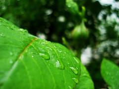 green SLIP ( ) (Nasser Hasani) Tags: plant flower green water rain leaf  dropping
