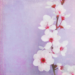Plum Blossoms (Shana Rae {Florabella Collection}) Tags: pink f