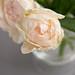 0905 flowers #8