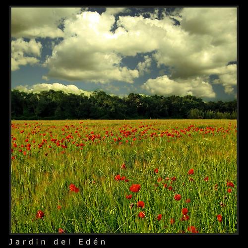 Jardin del ed n flickr for Jardines del eden sevilla