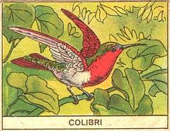 oiseaux mart 6