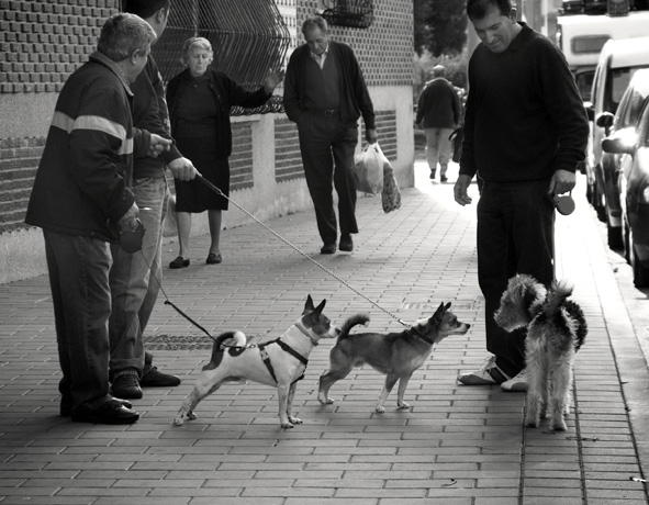 caninas miradas