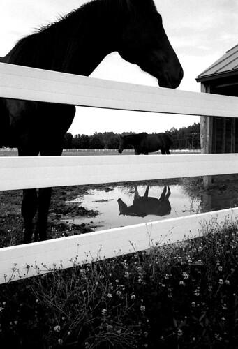 Horses. (Fuji Neopan 400. Olympus Infinity. Epson V500.)