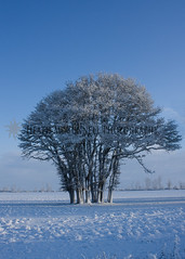 Trees-3 (HeathMcConnell) Tags: trees snow ice field landscape photography watermarked 1x15