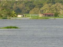 Rio Solimes - casa inundada (Wilmar Santin) Tags: brazil brasil am amazon brasilien amazonas brsil amazonia amaznia amazone amazzonia amazonien riosolimes careirodavarzea