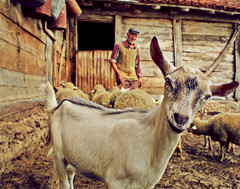 Harmony With Nature (AIeksandra) Tags: travel portrait people mountains nature closeup rural village serbia farming goat harmony balkans balkan biodynamic lookingatthecamera