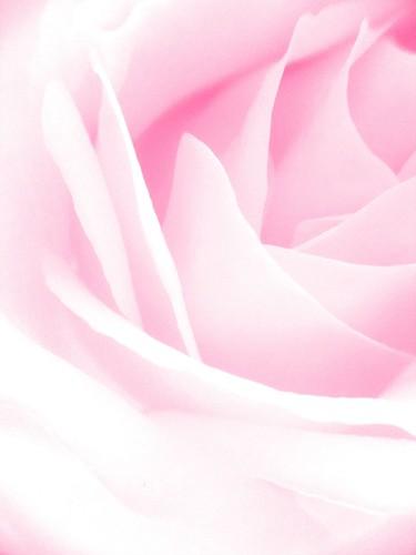Flower.pink