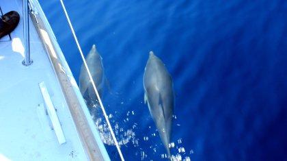 Delfine am Boot