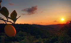 The sunset and ripe lemons - Tramonto e limoni maturi (Robyn Hooz) Tags: sunset italy ex canon lemon italia tramonto sigma tuscany toscana 1020 limone ripe hsm maturo mywinners 1000d