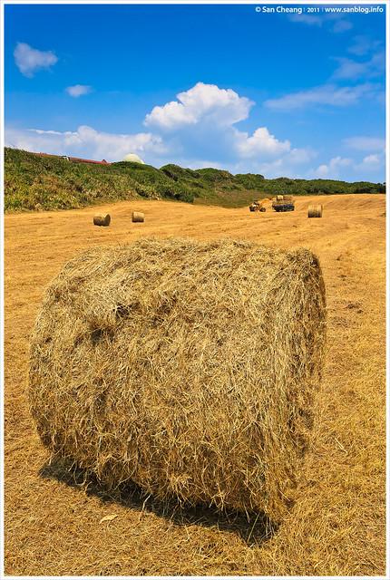齊來捲稻草