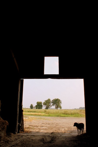 From Inside Hay Barn and Dixie Dog