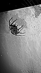 (eugeniu.darie) Tags: art dark spider arte horror ragno terrore flickrandroidapp:filter=none