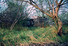 dad's birth house (zhorlack) Tags: ranch chevrolet film rio analog 35mm mexico canal nikon bravo cross 10 country birth tamaulipas campo mm process fm10 35 fm rancho rollo mezquite parcela matamoros riego pastizal