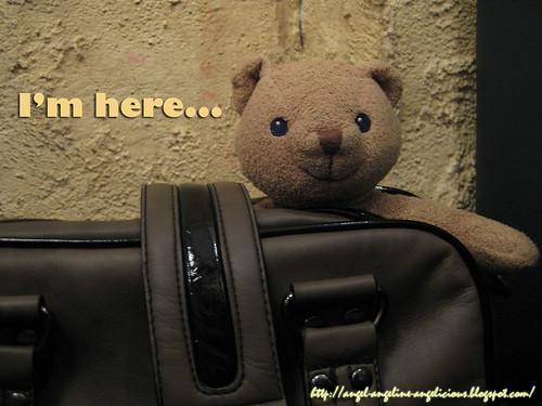 bearIMG_3369